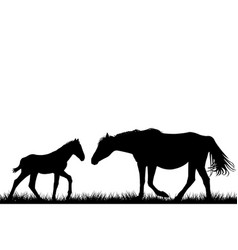 silhouettes of mare and her foal vector image