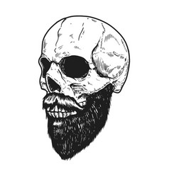 Bearded skull in engraving style on white vector