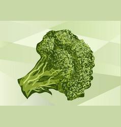 Broccoli on green vector