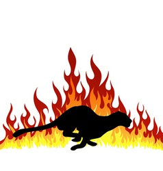 Flame puma vector