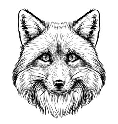 fox graphic sketch hand-drawn portrait vector image