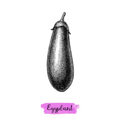 ink sketch of eggplant isolated vector image