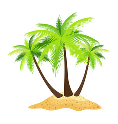 island palm trees isolated on white background vector image