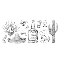 tequila sketch hand drawn mexican alcohol vector image