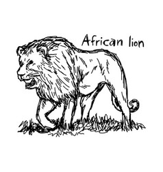 Angry african lion walking - sketch vector