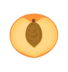 half peach fruit isolated on vector image