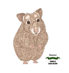 Hand drawn hamster colored sketch animal on white vector