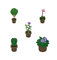 Isometric houseplant set of peyote flower vector