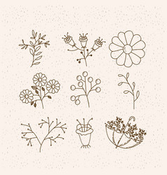 Monochrome graphic with set plants flowers and vector