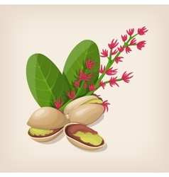 Pistachio nut in shell flower and leaves vector