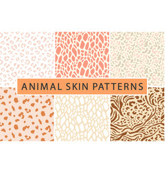 animal leopard skin pattern collection vector image