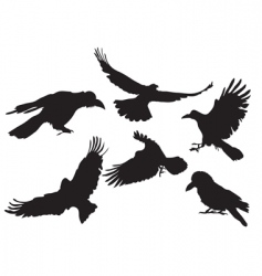 crow silhouette vector image
