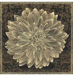 Drawing dahlia flower on grunge background vector