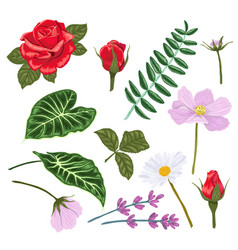 Set flowers and leaves for making compositions vector