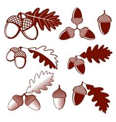 Oak acorns and leaves set vector image