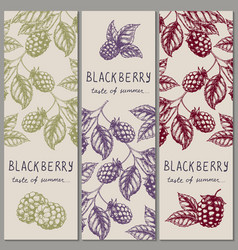 set of vintage hand drawn blackberry raspberry vector image