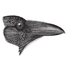 American raven vintage vector