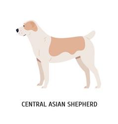 Central asian shepherd or alabai large herding vector
