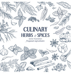 Frame composed hand drawn herbs and spices vector