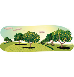 orchard with pear trees vector image