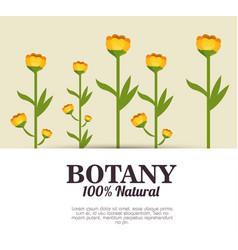 Botany 100 percent natural vector