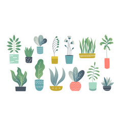 Flat houseplants indoor doodle garden plants vector