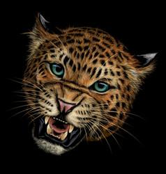 growling leopard color hand-drawn portrait vector image