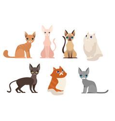 set different cat breeds vector image