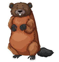 Beaver with brown fur vector image