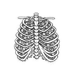 dotwork skeleton with blossom vector image vector image