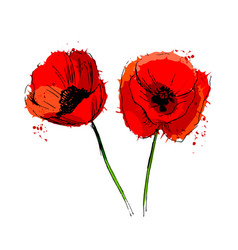 colored of poppy flowers vector image vector image