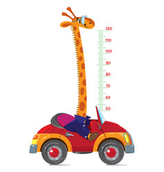 Giraffe on car meter wall or height chart vector