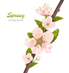 Spring Background with Cherry Blossom vector image vector image