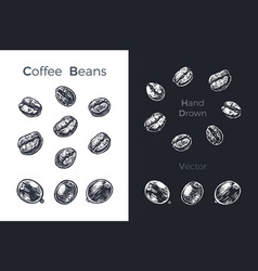hand drawn coffee beans sketch set vector image