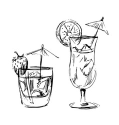 hand sketch of summer drinks vector image
