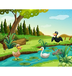 Scene with three ducks by the pond vector