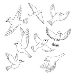set of flying birds vector image