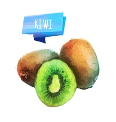 Kiwi hand drawn watercolor on a white background vector image