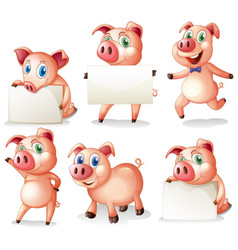 Pigs holding blank boards vector