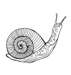 Snail coloring page for children and adults vector
