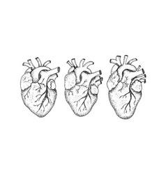dotwork three human hearts vector image