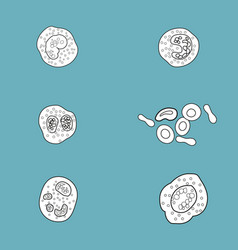 Bacteria and virus cell black decorative icons set vector