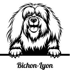 bichon-lyon - peeking dogs - breed face head vector image