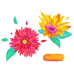 cute gerbera on white background vector image