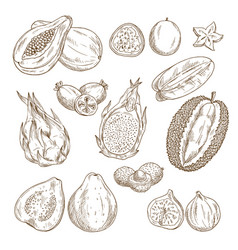 exotic tropical fruit isolated sketch set vector image
