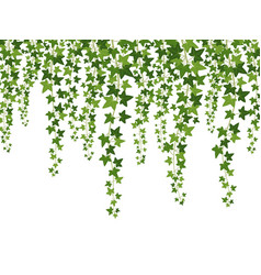 green ivy hanging from above creepers with vector image