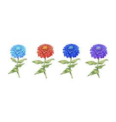 set of beautiful flowers zinnia isolated on white vector image