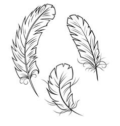Bird Feathers Set vector image