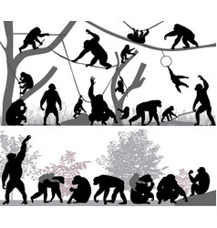 family of chimpanzee vector image vector image