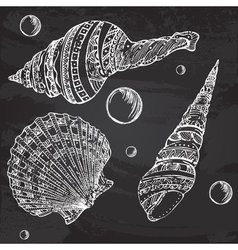 Set of decorative seashells painted with chalk vector image